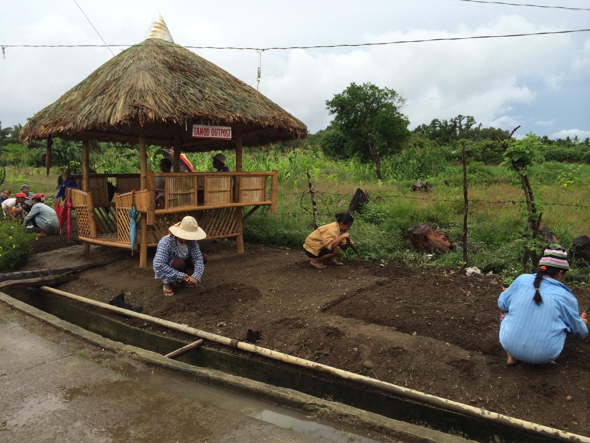 Typhoon Haiyan - Community Gardening Project